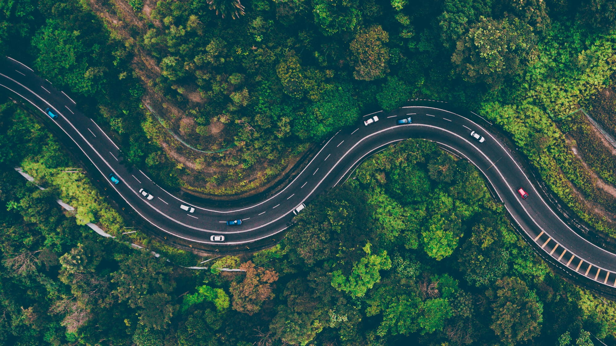 aerial view of road in the middle of trees